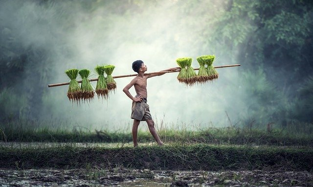 10~20代の農業の始め方