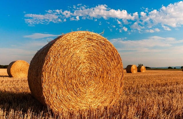 結論:農業を始めるのに年齢は関係ない